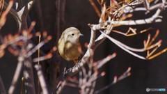 旅の鳥 Ⅱ