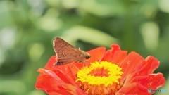 お蔵に中で舞う蝶~②