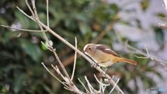 旅の鳥 Ⅳ