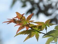 秋色始まる