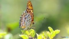 お蔵に中で舞う蝶~①