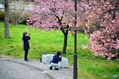 河津桜を撮る二人、、、。