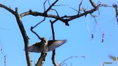 野鳥たちの秋~①