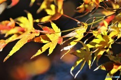残る秋を求めて、、、。