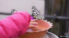 冬の蝶~⑭