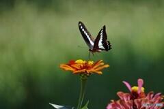 蔵から出た蝶~ⅸ