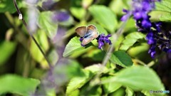 引き気味な蝶~ⅲ