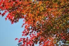 晩秋の輝き~ⅳ