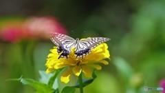 お蔵に中で舞う蝶~③
