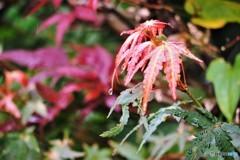 雨の日の秋色、、、。