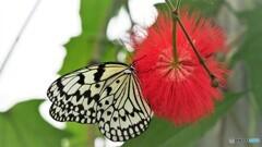 冬の蝶~⑮