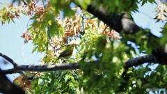 野鳥たちの秋~②