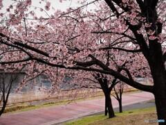 2021桜だより~xxvi