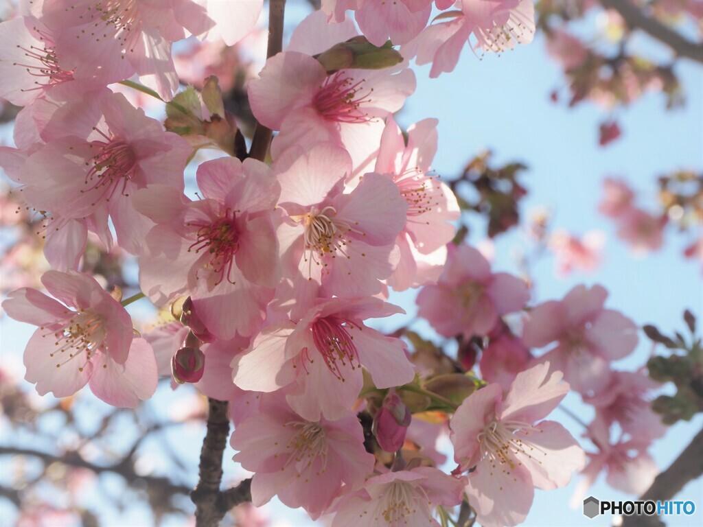 2021桜だより~xv