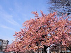 2021桜だより~xxi