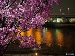 汐入夜桜~ⅵ