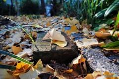 残る秋を求めて、、、ⅳ