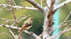 旅の鳥ーⅨ