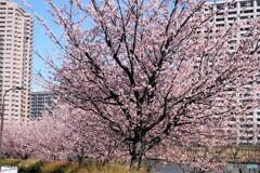 2021桜だより~xxv