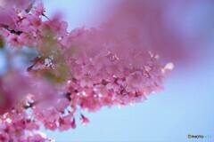 2021桜だより~xviii