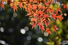 晩秋の輝き~ⅴ