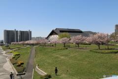 汐入公園の春