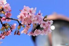 2021桜だより~xvi
