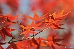 残る秋、、、①