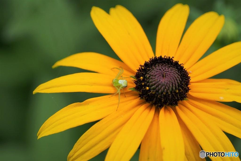 花の番人、、、。