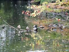 新宿御苑~水鳥達
