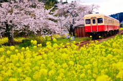小湊鉄道2014春