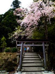 吉野 奥千本 金峯神社