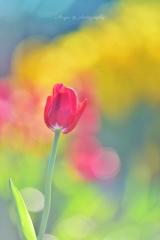 春を夢みて