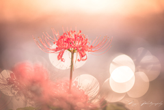 天界に咲く