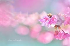 桜エナジー☆.。.:*・