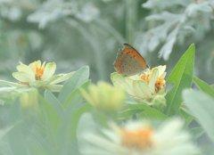 遊び疲れた夏の蝶