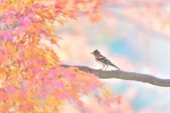 秋彩アトリ