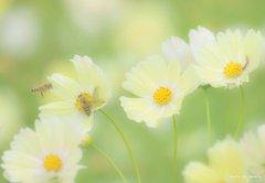 worm&bee