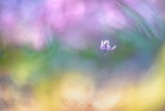 春の水彩画