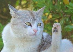 土手の美人猫