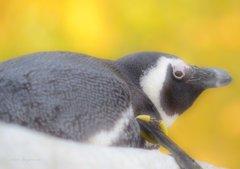 秋色ペンギンさん