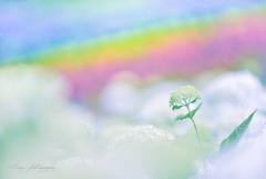 虹の彼方へ