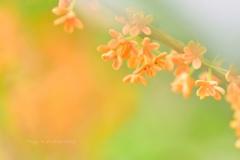 オレンジの星たち☆.。.:*・