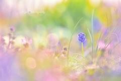 春の音色♪