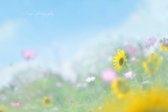 夏のキオク