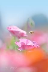 little bee ♪