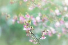春がきたよ♪