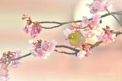 ❀ 春めじろ ❀