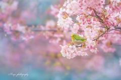 春のおとづれ