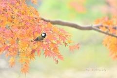 秋の四十雀